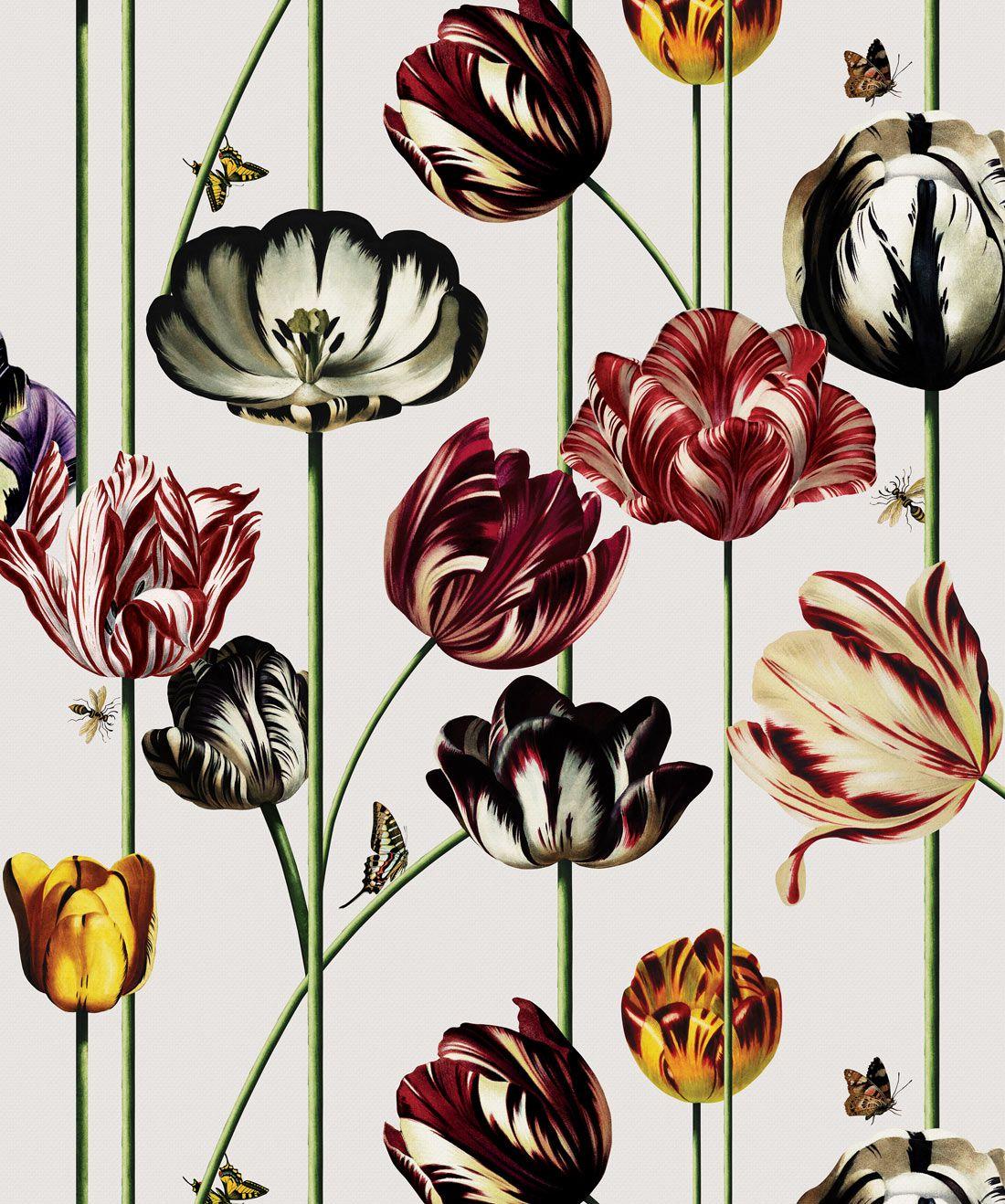 Tulipa Wallpaper