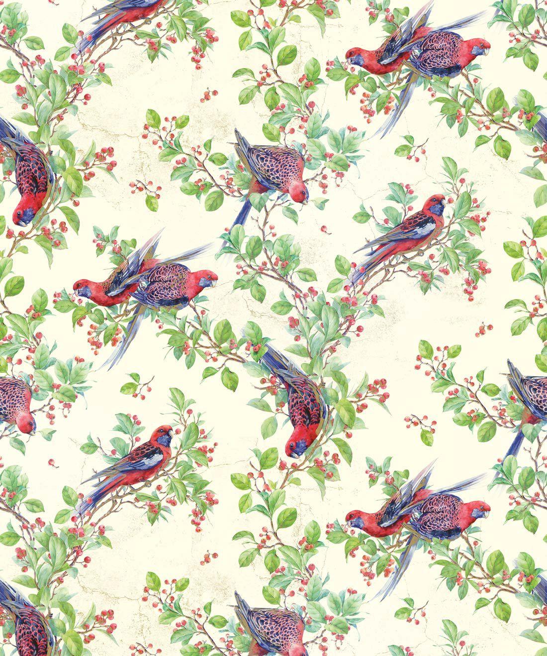 Crimson Rosella Wallpaper