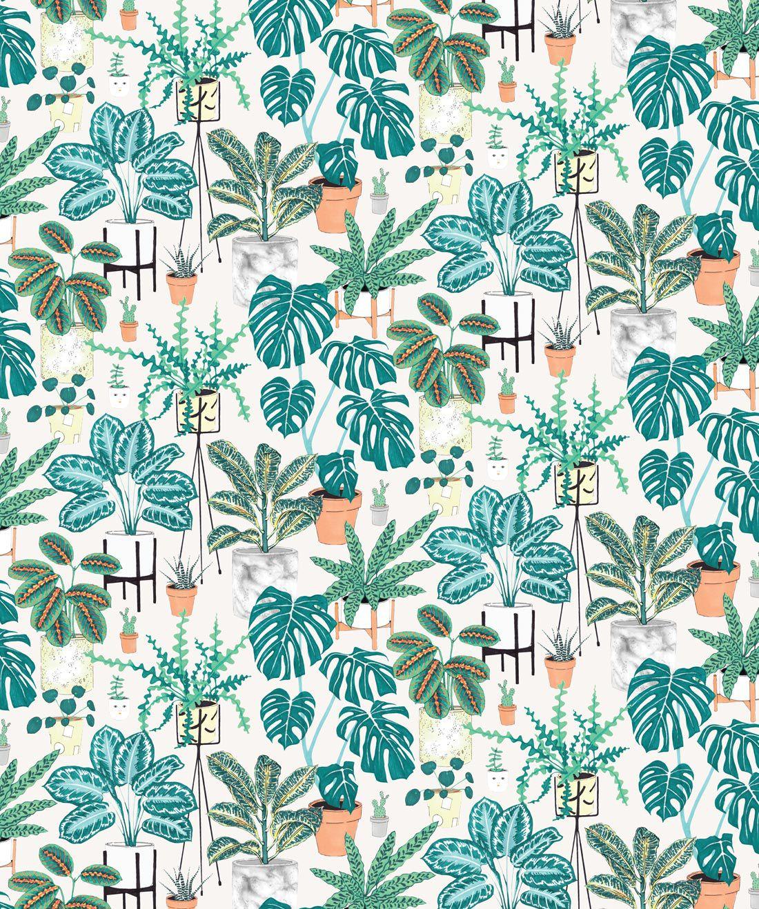House Plants Wallpaper