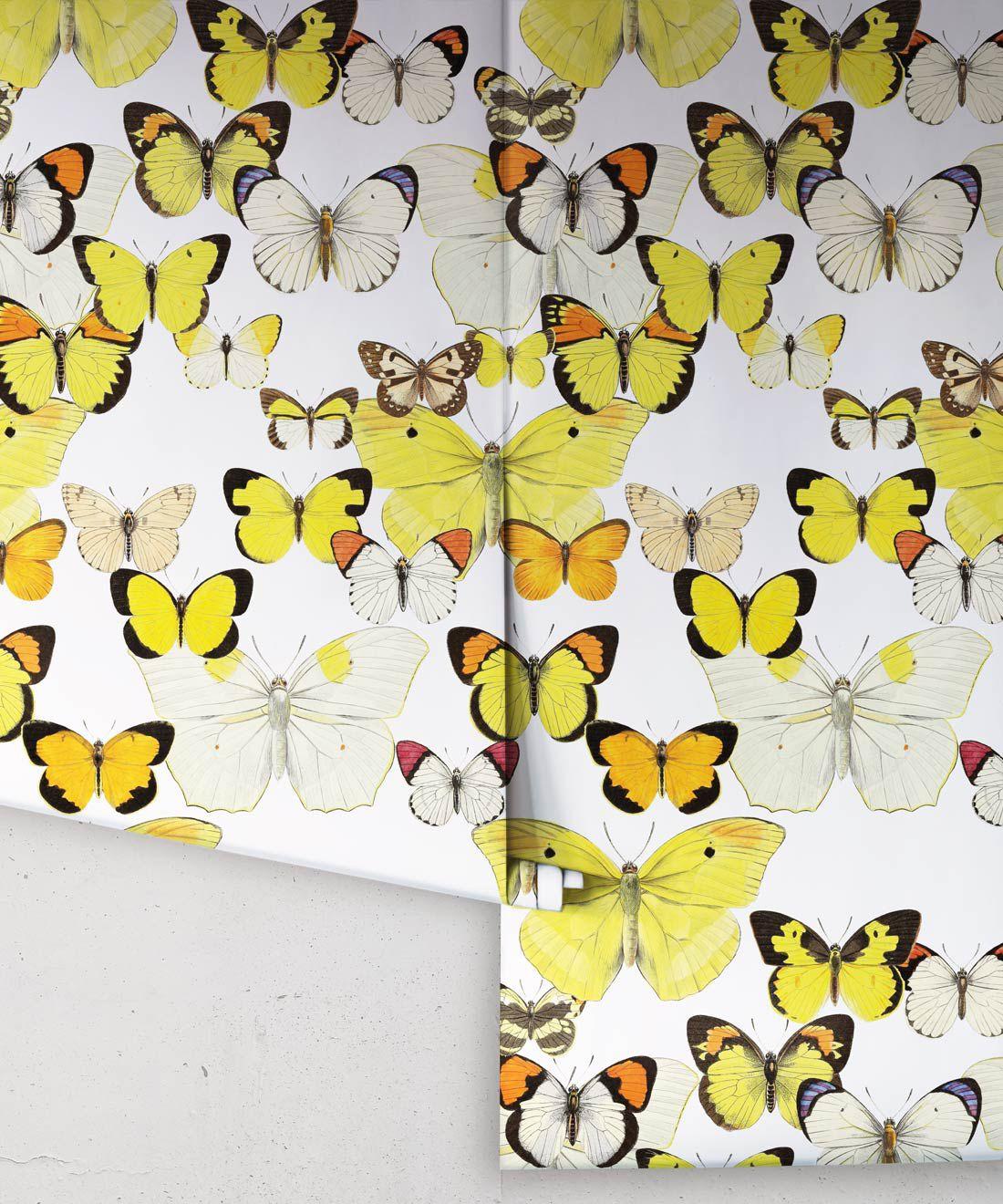 Papillon Medley Wallpaper •Butterfly Wallpaper •Rolls