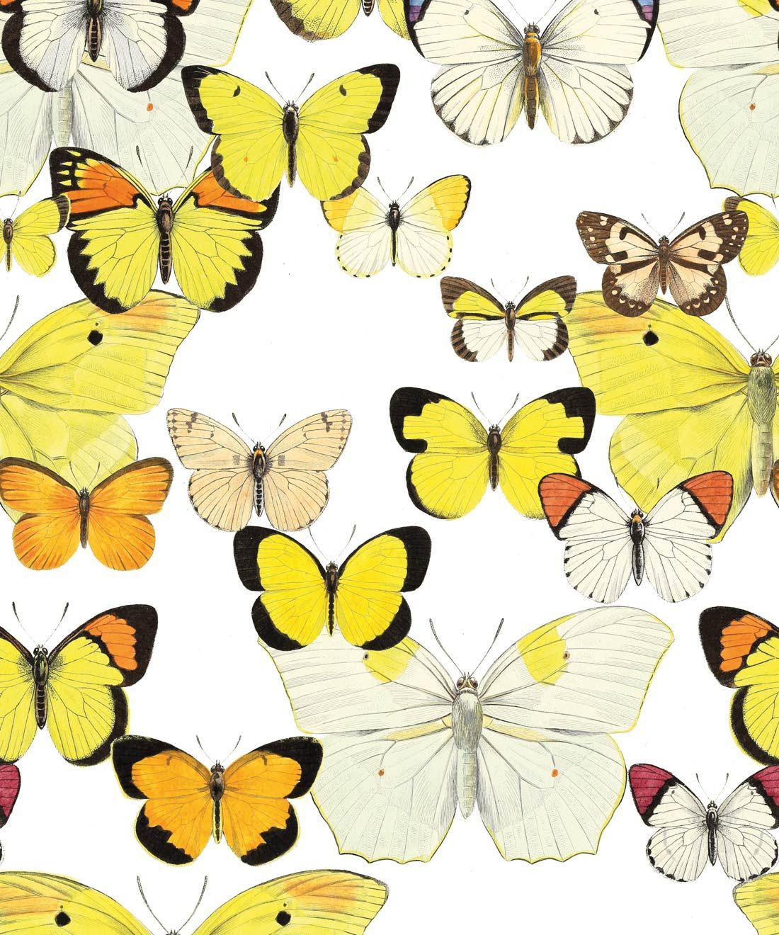 Papillon Medley Wallpaper
