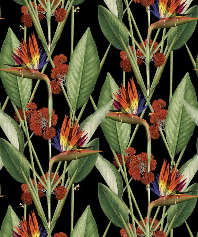 Birds Of Paradise Night - Black Wallpaper