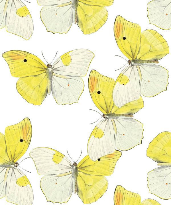 Blended Butterfly Wallpaper • White & Yellow Butterflies Wallpaper •Swatch