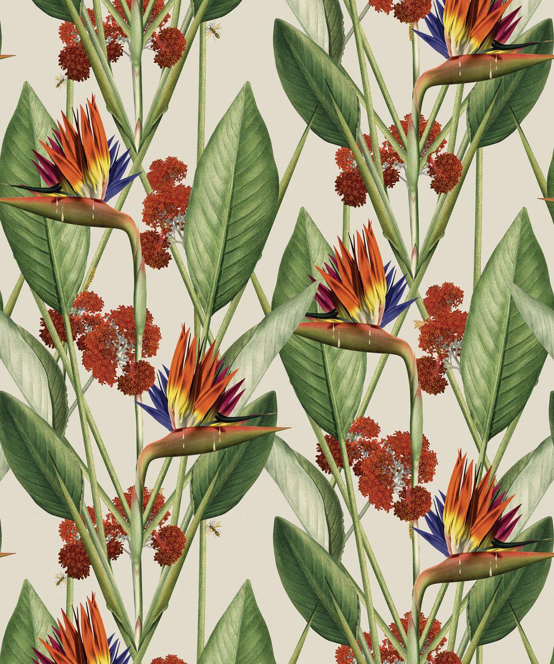 Birds Of Paradise Wallpaper (KH)
