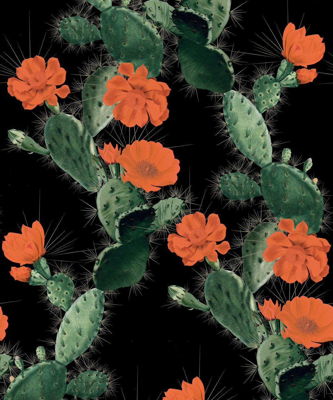 Cactus Red Night
