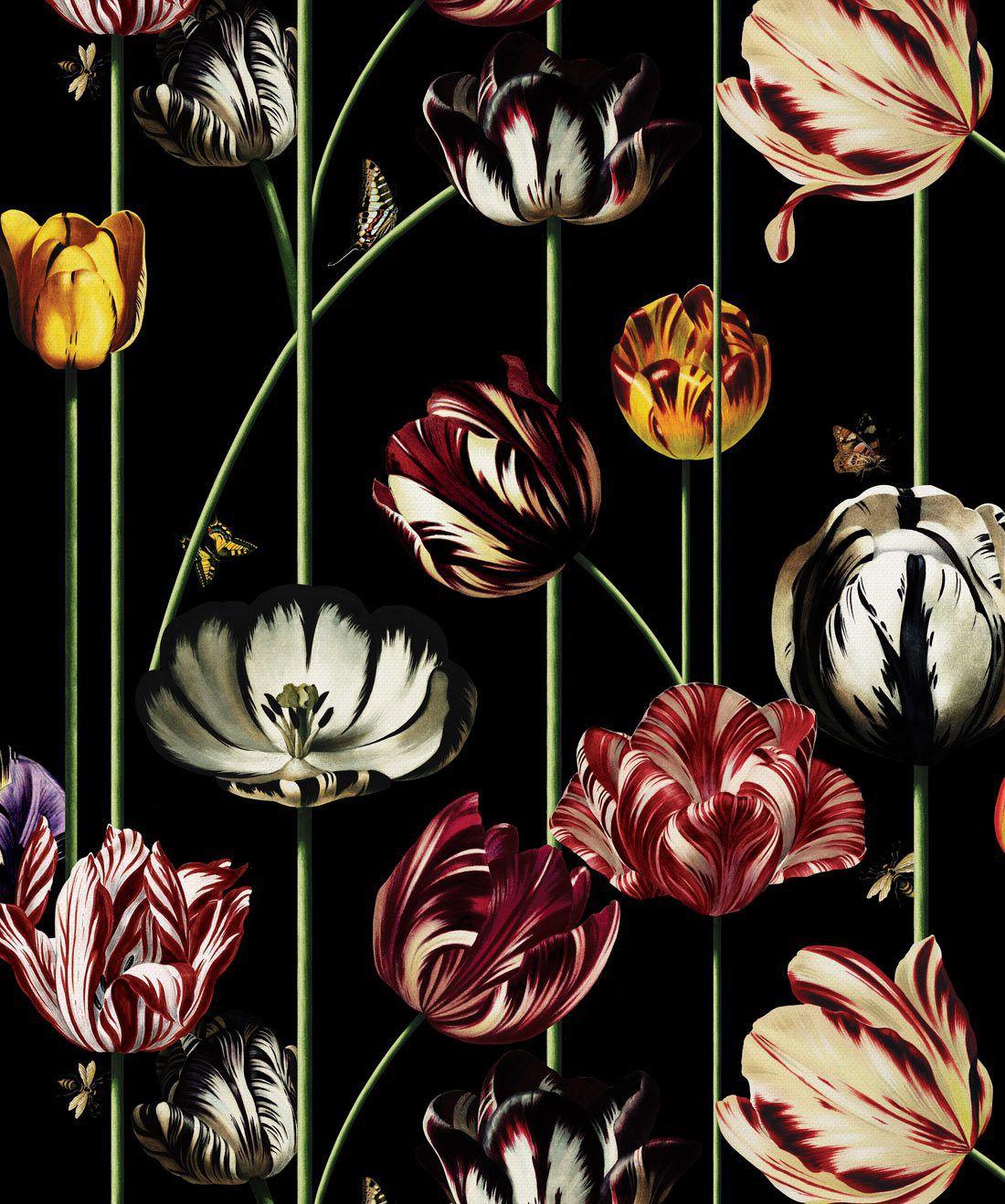 Tulipa Lux