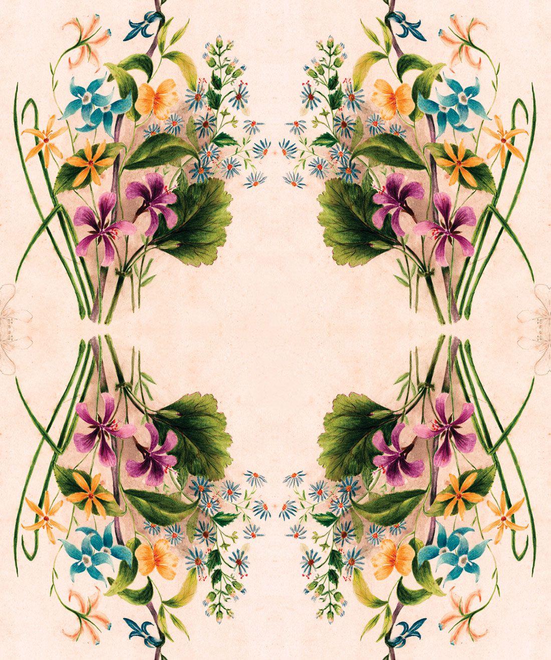 Euphemia 3 Wallpaper