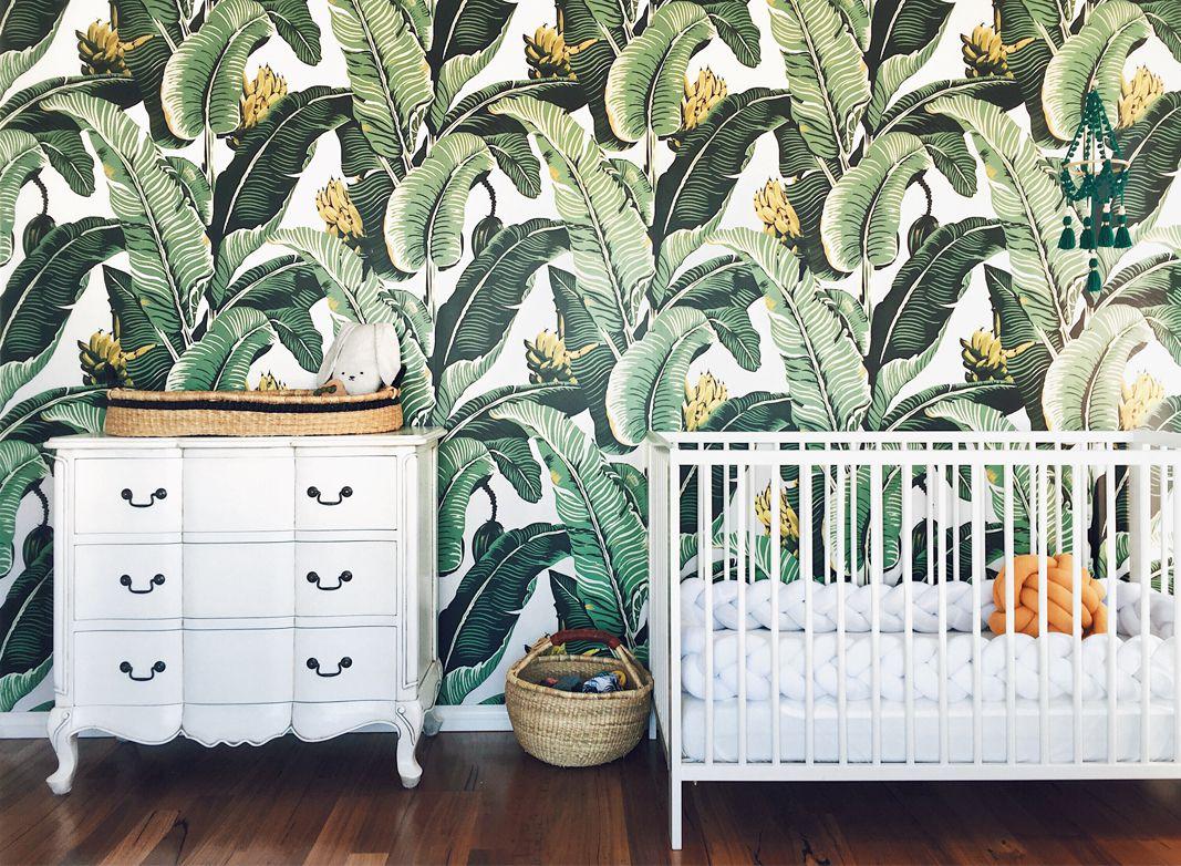 Jungle Palm Discontinued 1