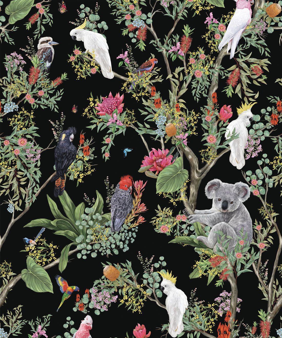 Australia Wallpaper • Cockatoos, Koalas, Parrots, Finches • Milton & King USA • Black Wallpaper Swatch