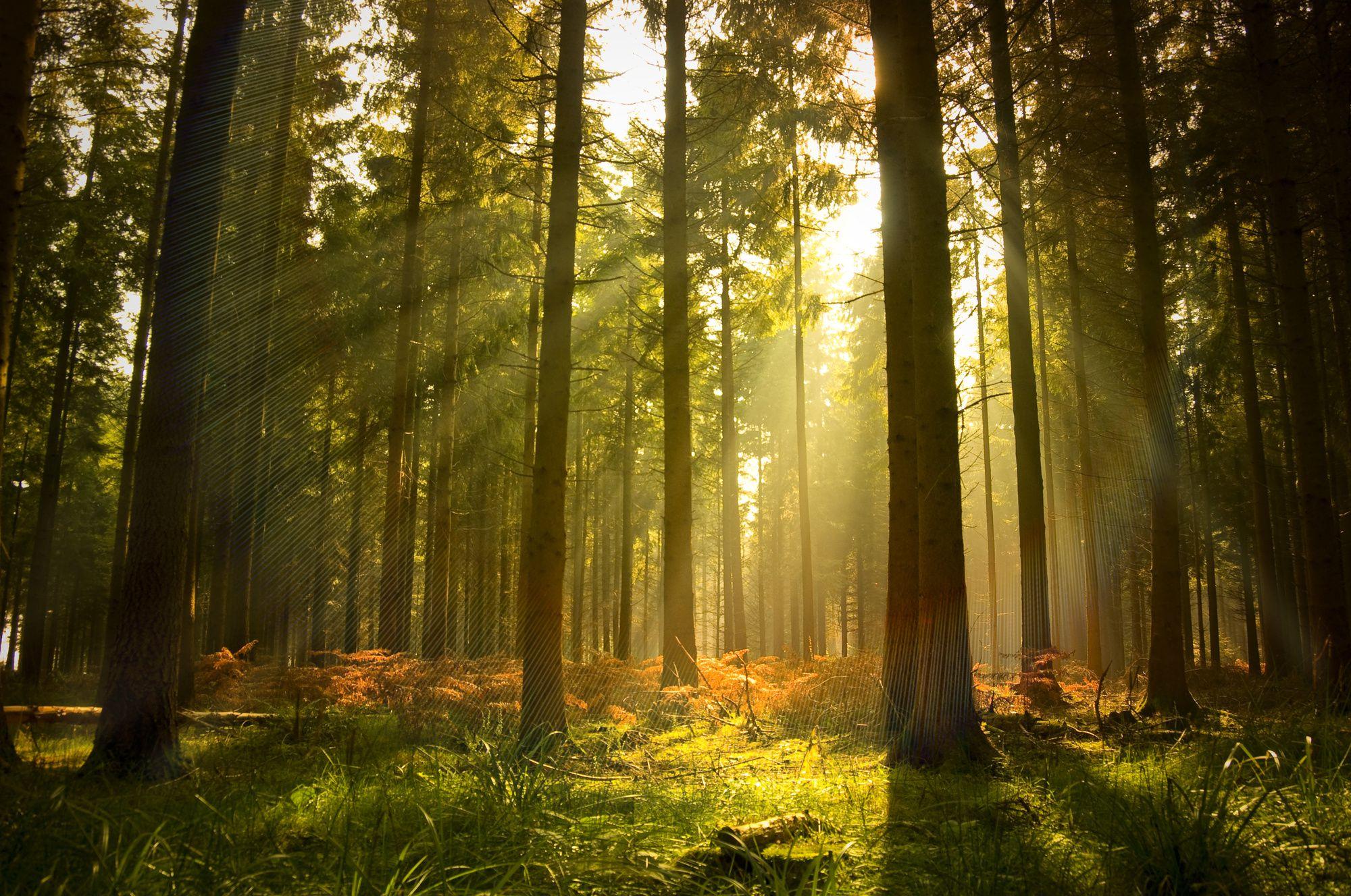 FSC Certified Forest