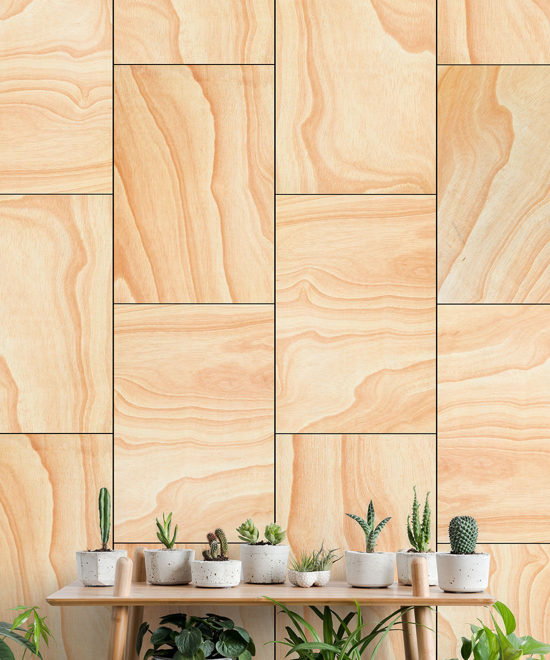 Ply Wood Wallpaper • Light Brown Wallpaper •Wood Grain Wallpaper insitu with a table and on top of the table is a row of small succulents