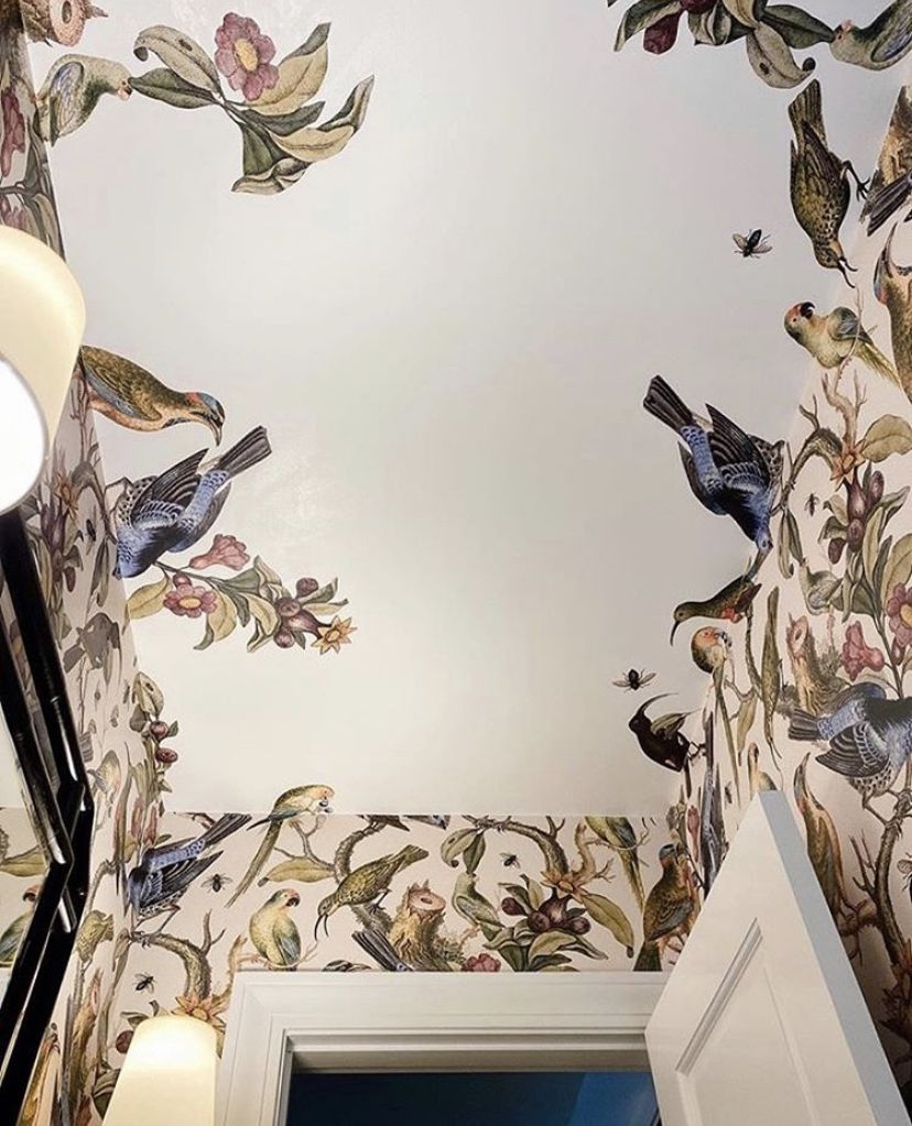 Ornithology •Bird wallpaper •Wallpaper on the ceiling