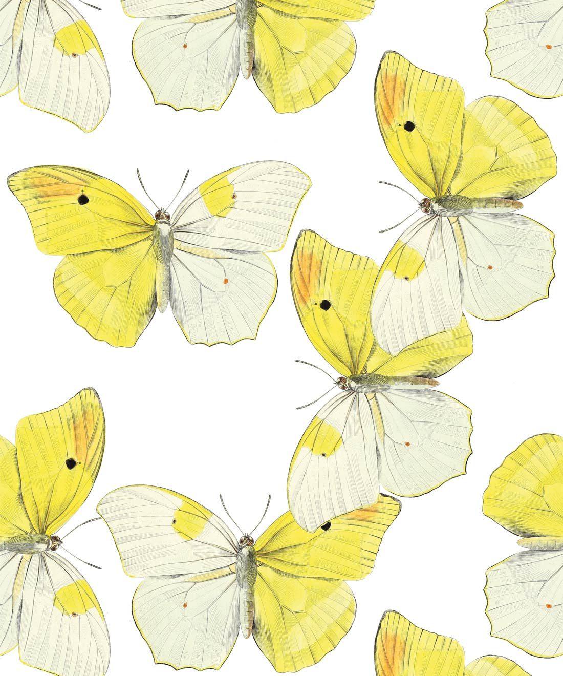 Blended Butterfly Wallpaper